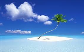 Paradise - Island with palm tree